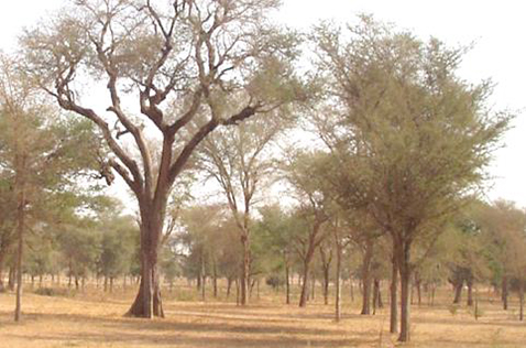 The Great Green Wall in the Sahel