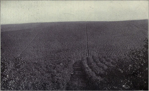Environmental History of Coffee in Latin America