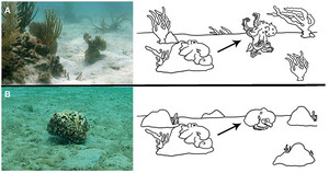 Rapid Adaptive Camouflage in Cephalopods