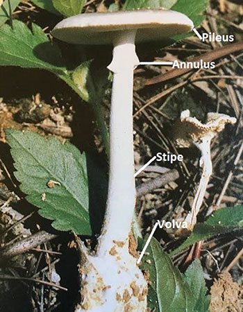 Cultivation and Environmental Impact of Mushrooms - Oxford Research